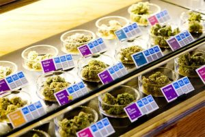 California college for dispensary