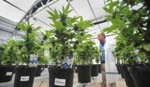 Florida marijuana workshops