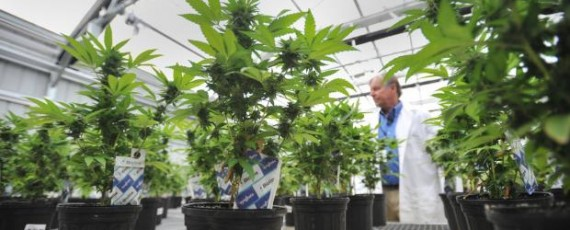 Florida marijuana workshops