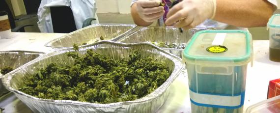 California cannabis academy