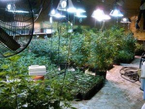 California cannabis business license4