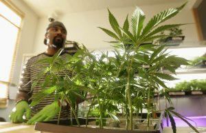 California medical marijuana applications