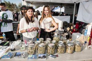 California 420 academy